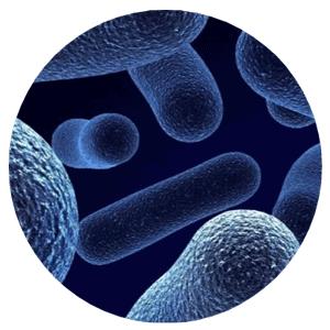 SEM bacteria